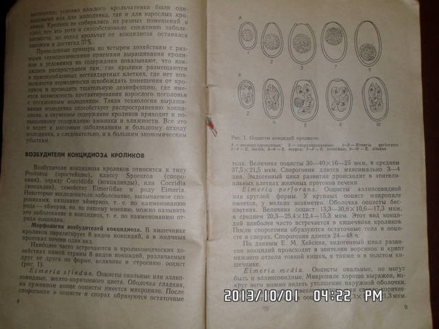 Кокцидиоз кроликов. Н.А.Колабский. 3210079_m