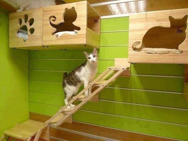 Кошки (Cats) - Page 2 3224986_m