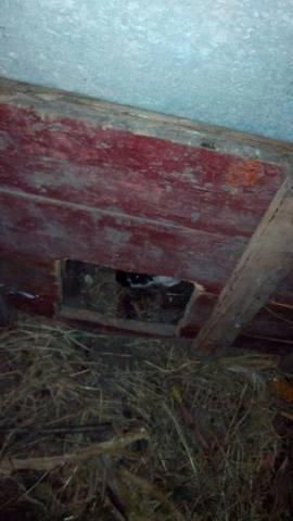 Содержание кроликов в ямах. - Страница 2 3293091_m