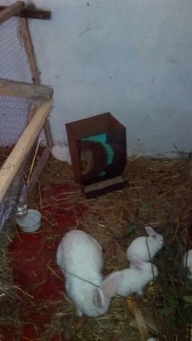Содержание кроликов в ямах. - Страница 2 3293097_m