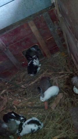Содержание кроликов в ямах. - Страница 2 3293099_m