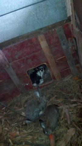Содержание кроликов в ямах. - Страница 2 3293100_m