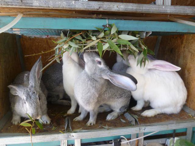 Кролики в вольерах. - Страница 3 3302754_m