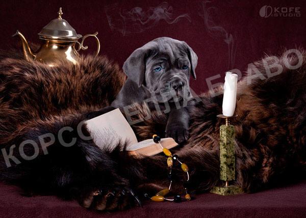 http://images.vfl.ru/ii/1381933770/44fe52b8/3309391_m.jpg