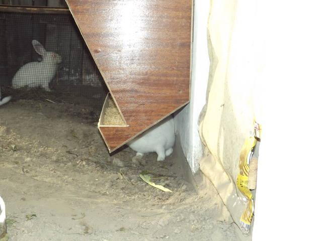 Кролики в вольерах. - Страница 5 3348458_m