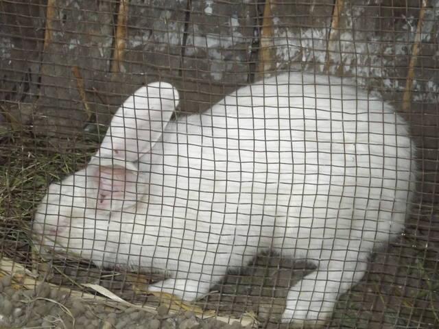 Кролики в вольерах. - Страница 4 3348457_m