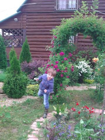 Выращивание роз на даче в подмосковье 35
