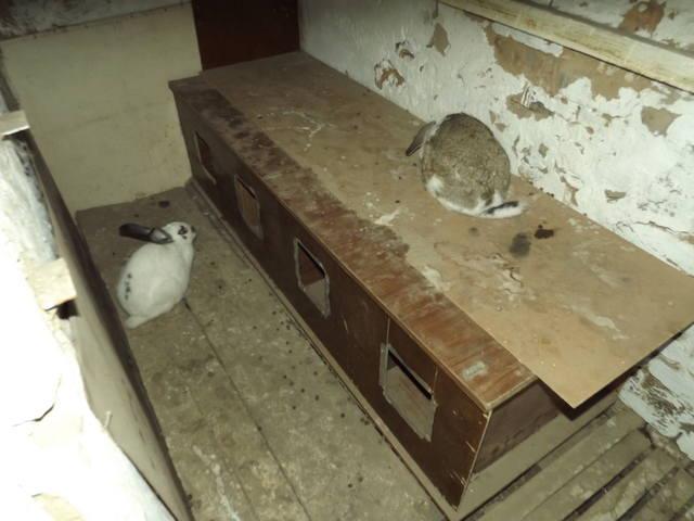 Кролики в вольерах. - Страница 5 3406613_m