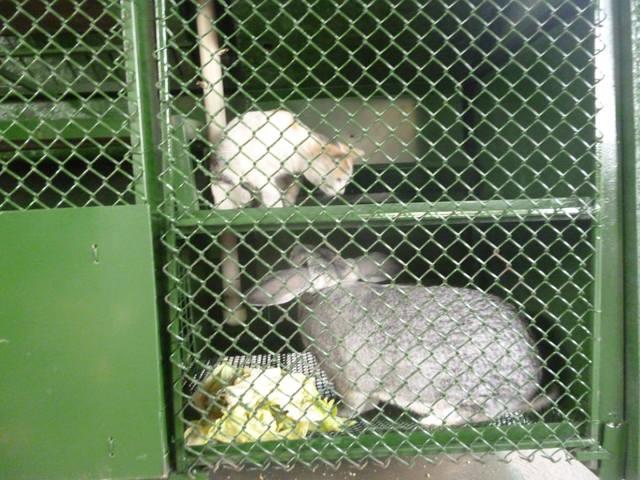 Кролики в вольерах. - Страница 5 3435157_m