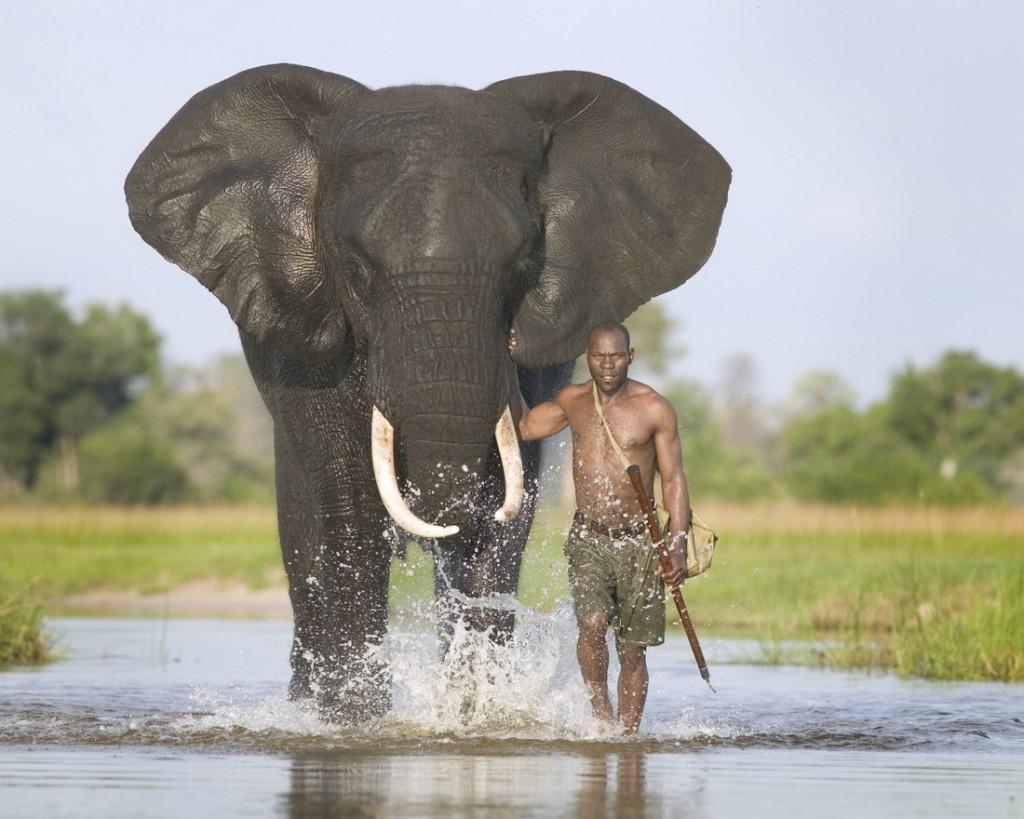 Секс слон кавказ 7 фотография