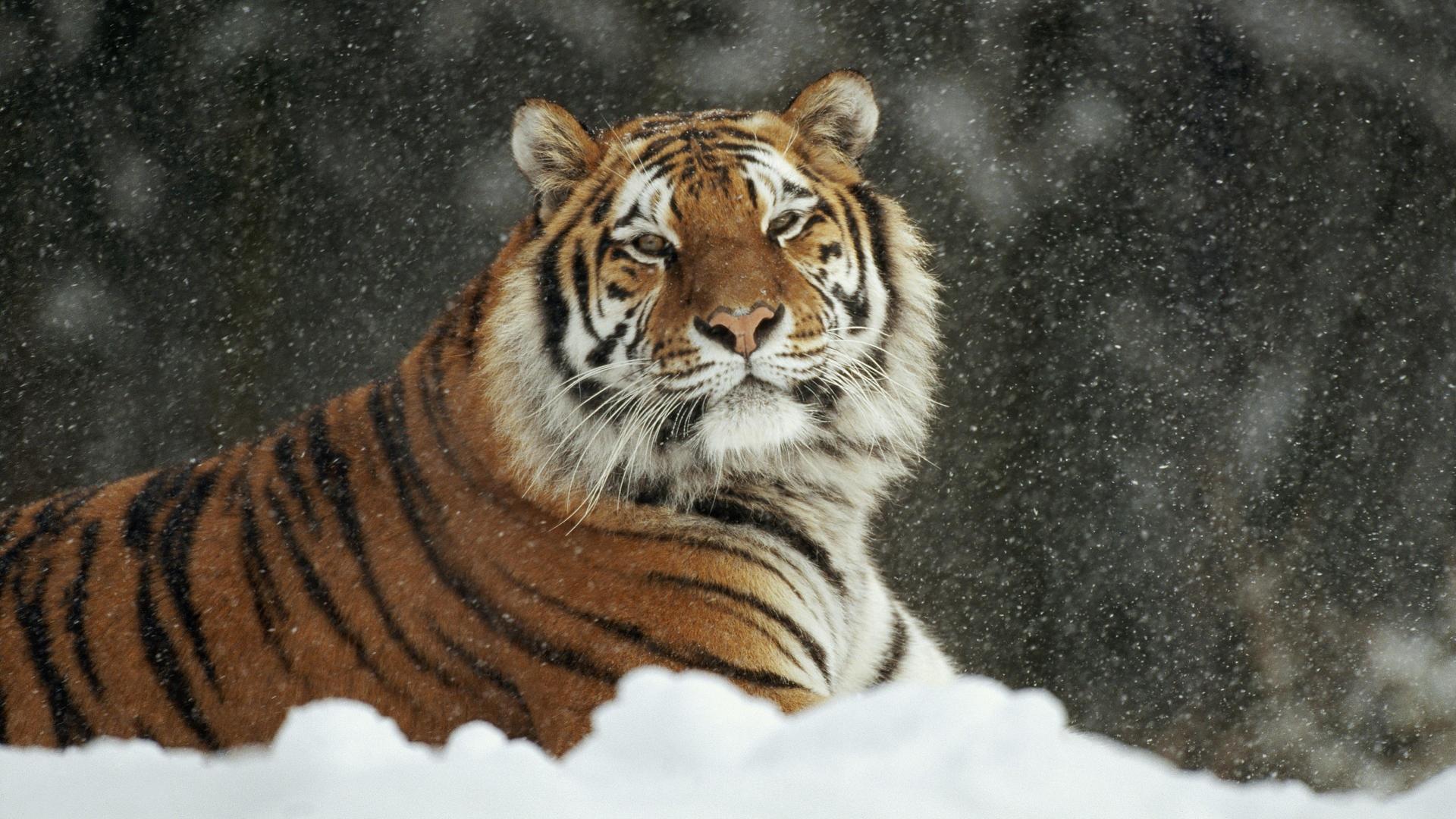 http://images.vfl.ru/ii/1384274655/05741ea5/3508082.jpg