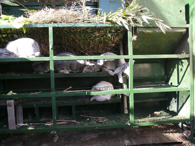 Кролики в вольерах. - Страница 6 3516321_m