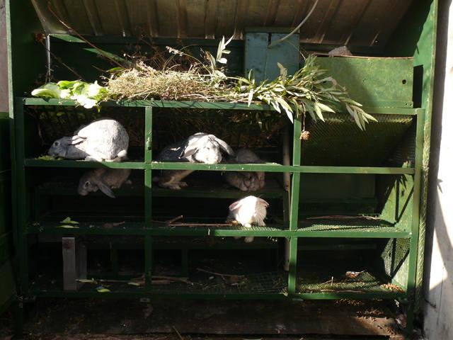 Кролики в вольерах. - Страница 6 3516322_m