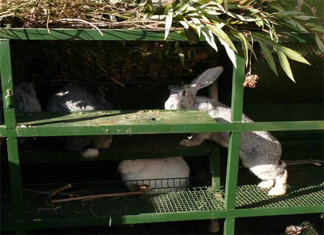 Кролики в вольерах. - Страница 6 3516323_m