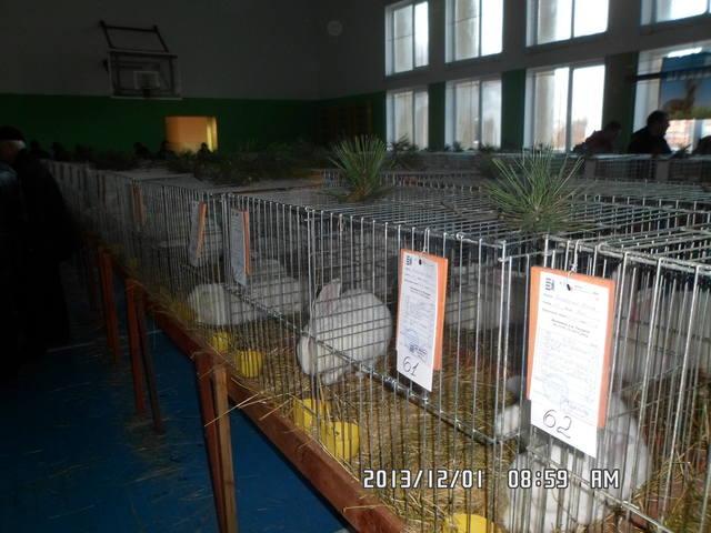 выставка в Ужгороде. - Страница 4 3671863_m