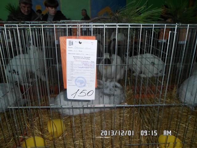 выставка в Ужгороде. - Страница 5 3672091_m