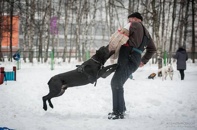 http://images.vfl.ru/ii/1386885503/9707b20f/3745317_m.jpg