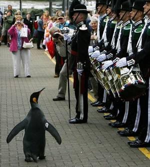 A pinguin6