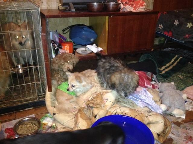 координаты четвёртой где камтрировать кошку киров калужская область рассказала, что планирует