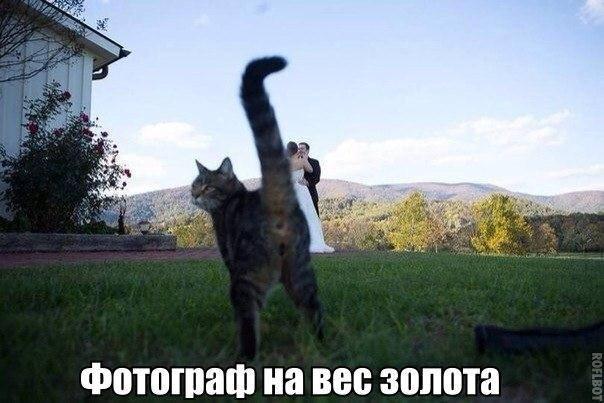 Смешные картинки, фото и видео. 3844228_m