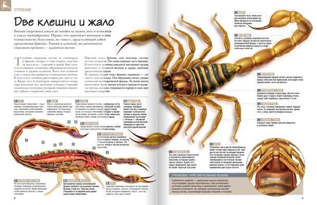 журнал насекомые и их знакомые 10 выпуск