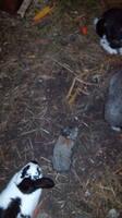 Содержание кроликов в ямах. - Страница 3 4008738_s