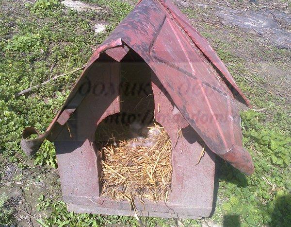 Как сделать гнездо для индоутки