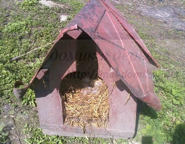 Гнездо для гуся своими руками
