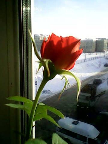 http://images.vfl.ru/ii/1391527597/55610238/4157818_m.jpg