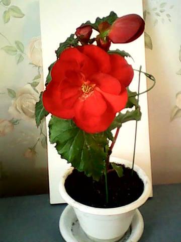 http://images.vfl.ru/ii/1392713113/61217efa/4277608_m.jpg