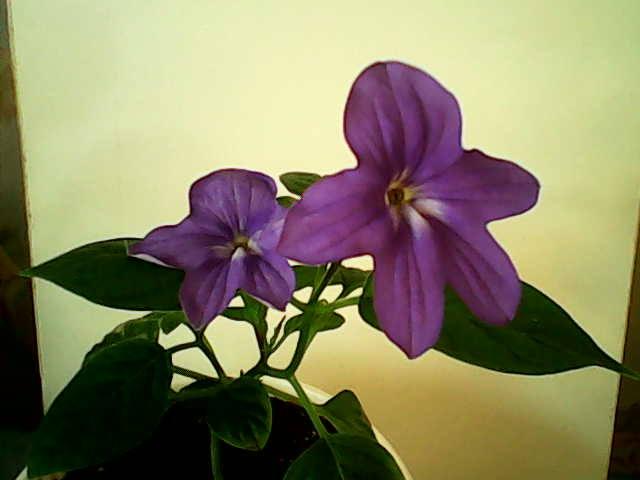 http://images.vfl.ru/ii/1392713113/8156b1c1/4277607_m.jpg