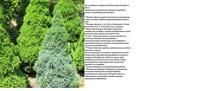 Участок с ноля для нулевого садовода-огородника - Страница 8 4491250_s