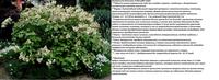 Участок с ноля для нулевого садовода-огородника - Страница 8 4491275_s