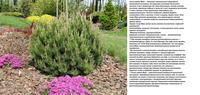 Участок с ноля для нулевого садовода-огородника - Страница 8 4491318_s