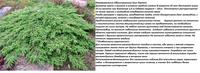 Участок с ноля для нулевого садовода-огородника - Страница 8 4492299_s