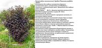 Участок с ноля для нулевого садовода-огородника - Страница 8 4492305_s