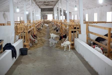 Как это сделано козий ферма