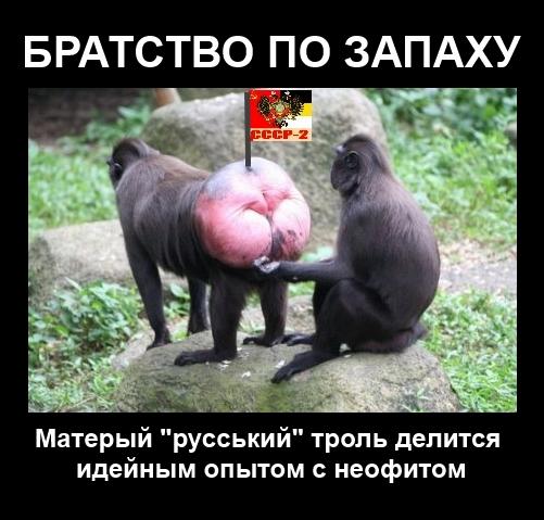 Возле Запорожской ОГА вырос огромный герб Украины - Цензор.НЕТ 5531