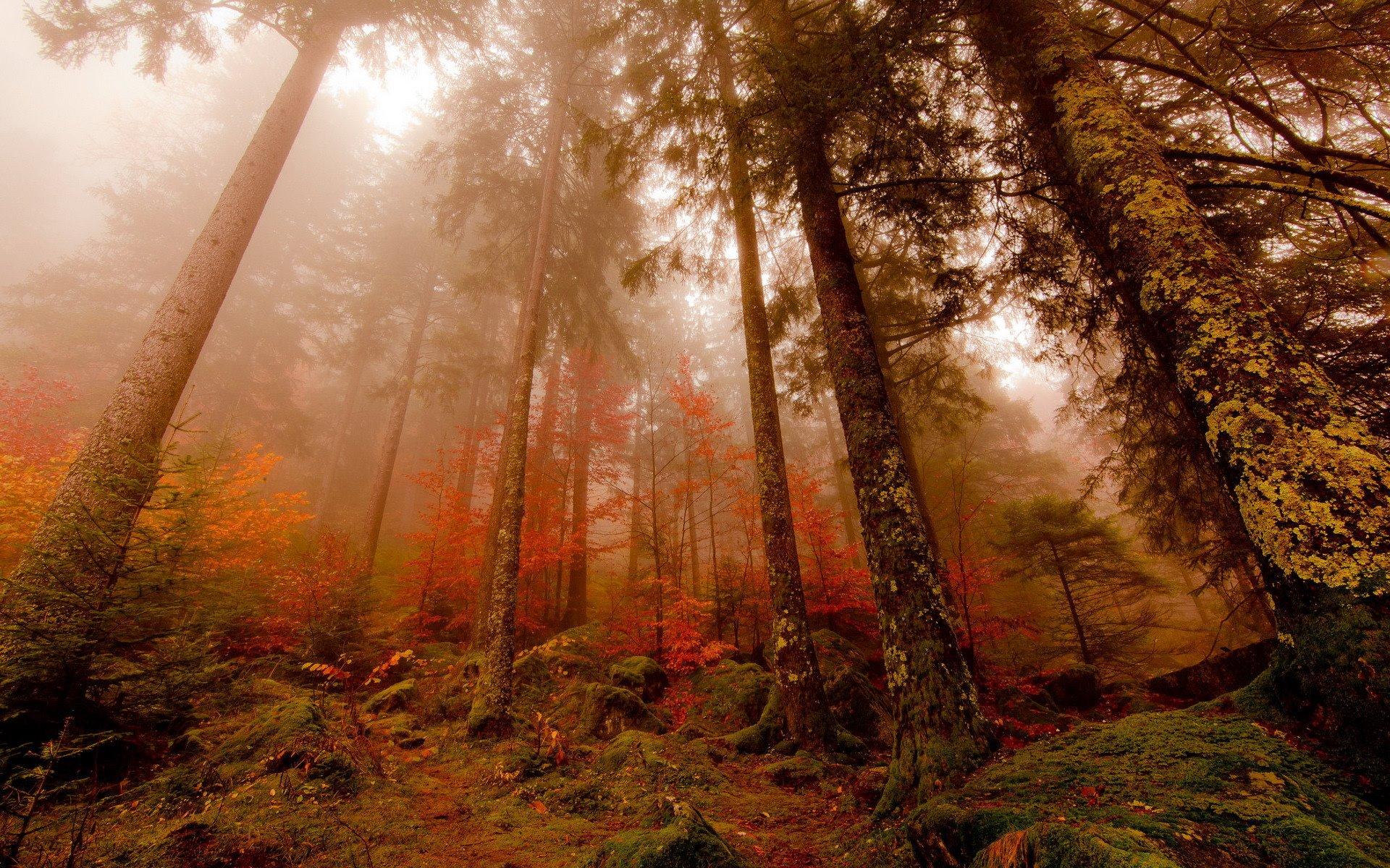 http://images.vfl.ru/ii/1396371211/10cf198f/4685806.jpg