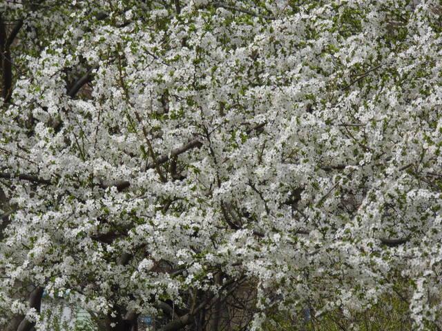 http://images.vfl.ru/ii/1396700929/e3342d06/4726818_m.jpg