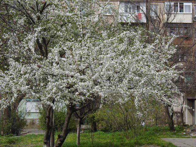 http://images.vfl.ru/ii/1396700933/6af577d4/4726824_m.jpg