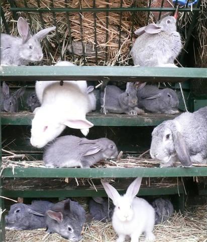 Кролики в вольерах. - Страница 33 4773518_m