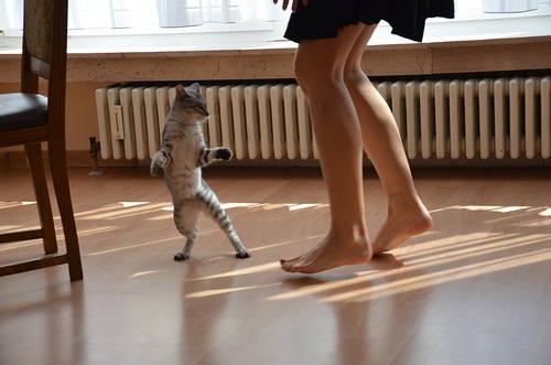 http://images.vfl.ru/ii/1397068745/30b92aba/4775277_m.jpg