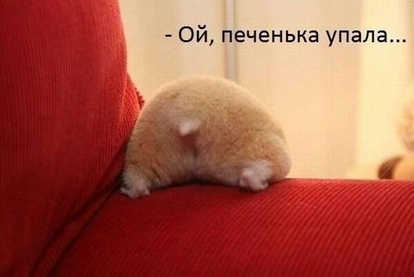 http://images.vfl.ru/ii/1397725061/26809de7/4861204_m.jpg