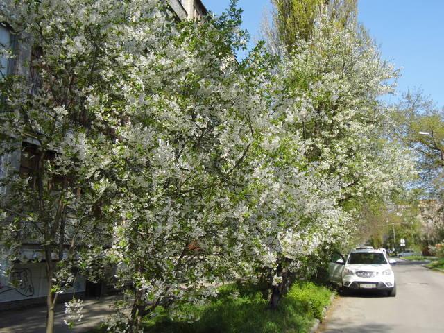 http://images.vfl.ru/ii/1397753163/d62a50ff/4865406_m.jpg