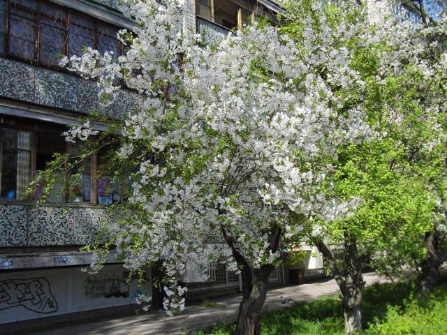 http://images.vfl.ru/ii/1397753165/5a899c4b/4865409_m.jpg