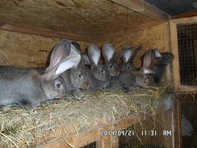 Крольчата. - Страница 14 4900480_m