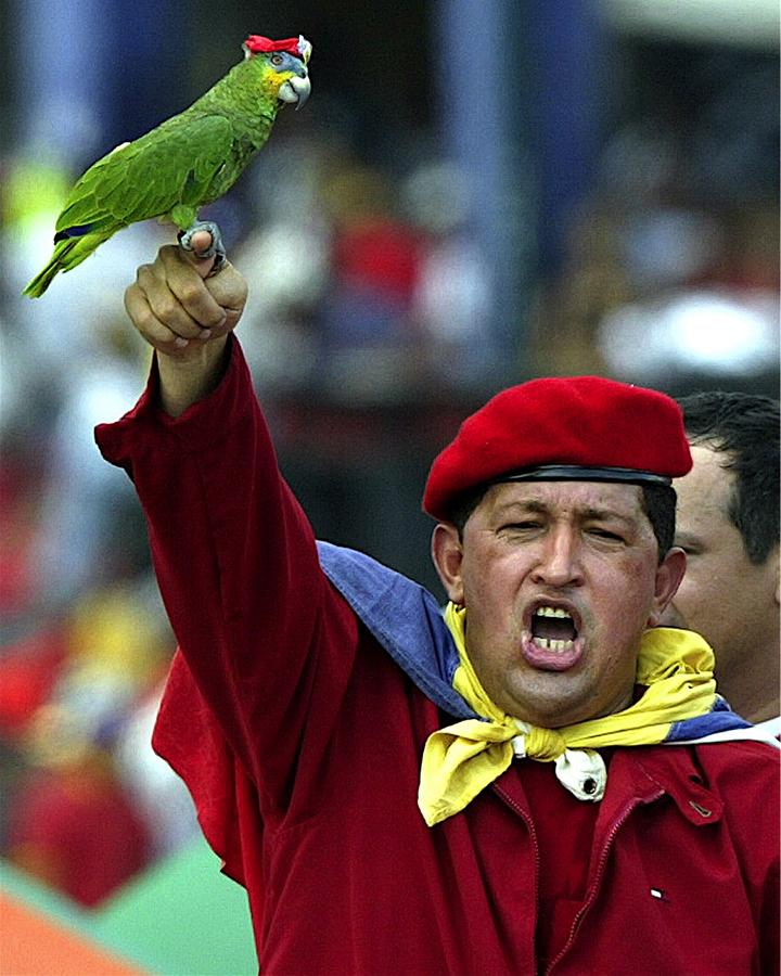 '' Чавес ''. Никита Людвиг.