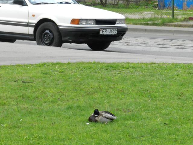 http://images.vfl.ru/ii/1399749812/fd55a7a0/5092474_m.jpg