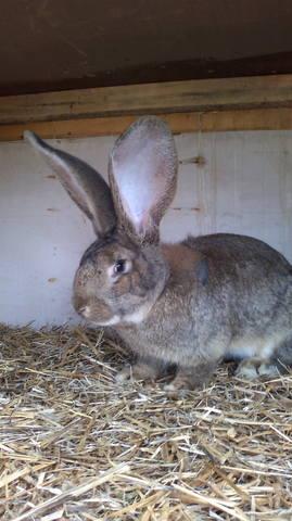 Флудильня о кроликах - Страница 16 5102564_m